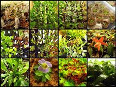 Let the pros from Josh's Frogs help you pick out the perfect terrarium or vivarium plants. Thousands of organic terrarium plants to choose from, on sale!