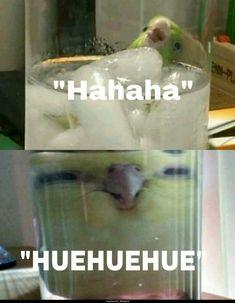 look at dis birb Funny Birds, Cute Birds, Cute Funny Animals, Funny Cute, Hilarious, Funny Parrots, Cockatiel, Budgies, Humor