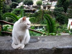 cats of Positano   Recent Photos The Commons Getty Collection Galleries World Map App ...