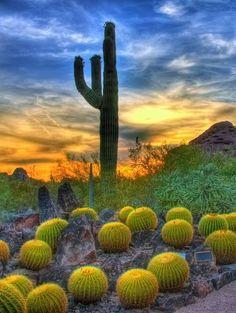 Sunset & Barrel Cactus in Sonoran Desert, Scottsdale Arizona © AshSLO