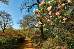 15 Amazing Secret Spots You Have To See In London! Isabella Plantation (Richmond Park) - head to King Henry's Mound for spectacular views of St Paul Cathedral Best Parks In London, Underground Map, Hidden Garden, Richmond Park, Royal Park, London Places, London Airports, Things To Do In London, London Travel