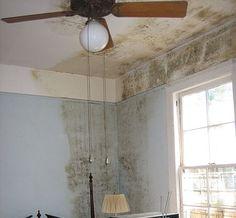 Aprenda truques simples, fáceis e baratos para exterminar o mofo em sua casa!