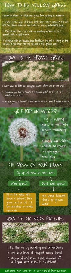 5 lawn repair fixes for yellowing grass, bare / brown patches, weeds, and moss. www.world-of-lawn-care.com/lawn-repair-guide.html #lawncare #grass #weeds