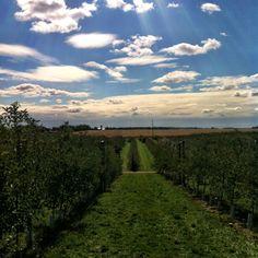 Kuiper Family Farm. Apple picking at its finest.