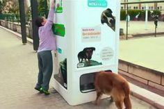 Máquina fornece ração a cães e gatos abandonados em troca garrafas plásticas | #CãesAbandonados, #GatosAbandonados, #Istambu, #Jmj, #Ração, #Reciclagem