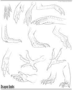 Sharing some studies I did of bird/dinosaur/lizard limbs. Hope you find it useful : )