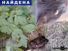 Найдена кошка г.Челябинск http://poiskzoo.ru/board/read28967.html  POISKZOO.RU/28967 Кошечка голубая живёт на улице чистенькая была домашняя ест только мягкий корм прошу откликнуться старых хозяев или пусть заберут добрые руки уже холодно становиться она пропадёт  РЕПОСТ! @POISKZOO2 #POISKZOO.RU #Найдена #кошка #Найдена_кошка #НайденаКошка #Челябинск
