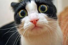 """Széles körben elterjedt tévhit, hogy macskák csak """"fekete-fehérben"""" látnak, pedig nem. A macskák és emberek látása közötti különbség legfontosabb oka a retináik különböző felépítése."""