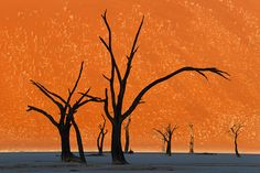Camel Thorn Trees, Namibia: | 28 Incredibly Beautiful Places You Won't Believe Actually Exist