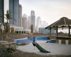 Photos of animals wandering a post-human Dubai