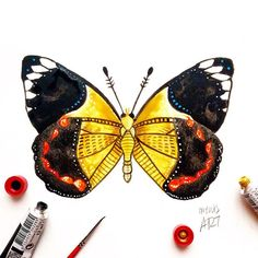 """Day 37 of my challenge #100daybutterflies #100daychallenge inspired by """" Delia's Timorensis"""" butterfly can be found in America  #arts_help #art_empire #imaginationarts #artdaily #art_spotlight #challenge #art  #illustration #butterfly #handdrawnart #valleyofbutterflies #nature #phooftheday #doodle #love #bw #rtistic_feature #featuregalaxy #creative_instaarts  #me #worldbutterflies #happy #watercolor #acrylic #paint #artist_sharing #phanasu #painting"""