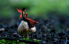 Fairy_on_a_Mushroom_by_DarkRaven17