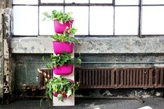 Galentines Day Project: How To Make a Portable Vertical Garden Tower Irrigati… All Plants, Water Plants, Green Plants, Indoor Plants, Flamingo Flower, Green Environment, Hanging Planters, Stone Planters, Plant Species