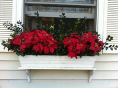 Poinsettias and Holly window boxes for the Holiday season.