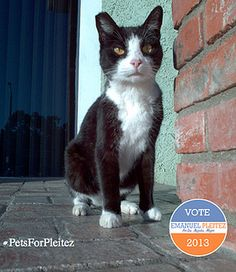 Cats know that #Pleitezforla is the right choice for Los Angeles