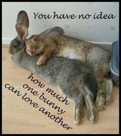 bunny love - never keep a single rabbit