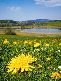 S Bahn, Der Bus, Switzerland, Mountains, Nature, Plants, Travel, Hill Walking, Road Trip Destinations
