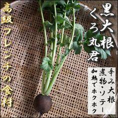 激レア西洋野菜・黒大根(くろ丸大根)-葉なし-1個【楽天市場】 ステビア栽培で農作物が元氣で美味しい!