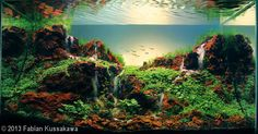 'Seven Falls' aquascape by Fabian Kussakawa 2013 AGA Aquascaping Contest - Entry #353