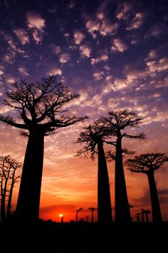 Beautiful sunrise in Madagascar Places Around The World, Around The Worlds, Beautiful World, Beautiful Places, Photo Images, Beautiful Sunrise, Amazing Nature, Beautiful Landscapes, Photos