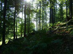 Les se probouzí, Makovice, srpen 2014