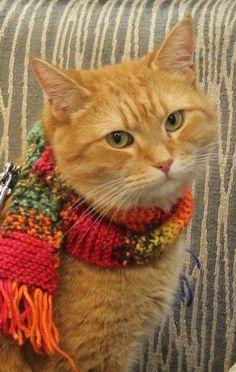 Street cat Bob, Islington - July 2014