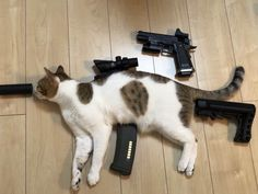 Here are 73 funny pictures to make your day. Don't forget to share this hilarious pictures with your friends. Animals And Pets, Funny Animals, Cute Animals, Funny Cat Pictures, Animal Pictures, Cute Cats, Funny Cats, Russian Cat, Master System