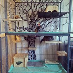 chinchilla cage set up