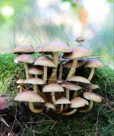 Herfst Fotowedstrijd - Gelders Goud Stuffed Mushrooms, Autumn, Vegetables, Stuff Mushrooms, Fall Season, Fall, Vegetable Recipes, Veggies
