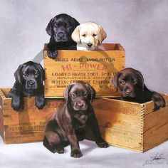 For a Great New Waterfowl Hunting and Retriever Training Store Check out…