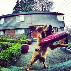 Dog || Gopro shot