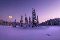 Fine Art Gallery - Matt Shannon Photography Victoria, Winter Night, Vancouver Island, Fine Art Gallery, Night Skies, Landscape Photography, Cool Pictures, Sky, Park