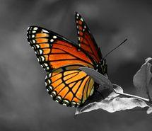 borboleta, butterfly