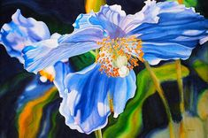 Marney Ward Flower Paintings.