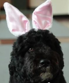 The First Dog endures Easter humiliation.
