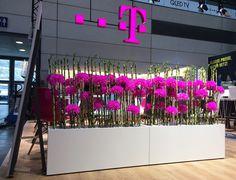 #Raumteiler für die #Telekom, #Messestand in #Hamburg, #Hamburgmesse, #Pink, #pinkflowers, #pink, eingefärbte Chrysanthemen, #corporatedesign
