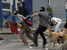 Loukanikos The Greek Riot Dog Central America, South America, Thats All Folks, Street Dogs, Pink Flamingos, Athens, Pup, Africa, Creatures