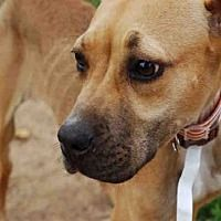 Atlanta, Georgia - Labrador Retriever. Meet PRECIOUS, a for adoption. https://www.adoptapet.com/pet/19974249-atlanta-georgia-labrador-retriever-mix