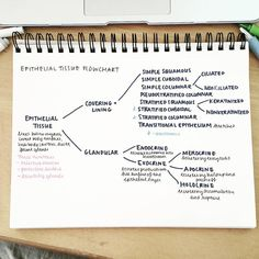 """studyallure: """" It really helps to simplify and organize things by arranging them into readable flowcharts. 📑 This is just an overview of epithelial tissues; I am hoping to make another flowchart or..."""
