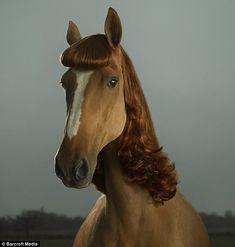 Only in Australia: Florence the horse looks demure with her fringe and ginger mane