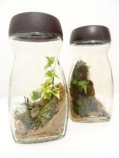 Coffee Jar Terrarium