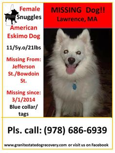 "Missing since 3/1/2014 - Lawrence, MA - ""Snuggles"" is an 11.5 year old, 21 lb, Female, American Eskimo Dog. She is all white wearing a blue collar with rabies tag and is microchipped. Snuggles is shy and may not approach so do not chase simply call family with sightings. She was last seen on Jefferson St. by Bowdoin St. Please share to get this little lady home.(djc)  Pls. Call: (978) 686-6939 or (978) 701-4301"