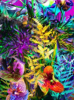 Torkil Gudnason - Electric Blooms