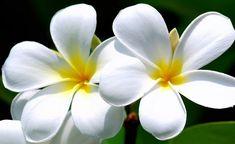 Malaysian Flowers by PanicButtonUK, via Flickr
