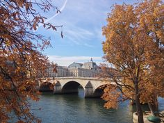 Pont Royal in the core of Autumn.   Read the first post about my new life in Paris, here:  http://www.gourmanderie.net/blog/paris-journal-wabi-sabi