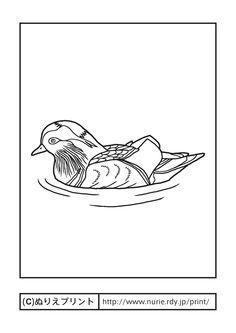 オシドリ・鴛鴦(主線・黒)/鳥取県の鳥/無料塗り絵/都道府県【ぬりえプリント】