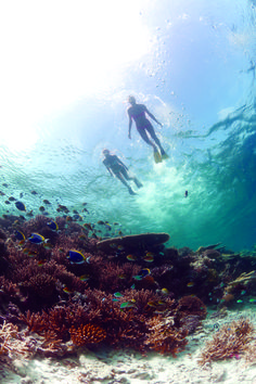 Snorkel the UNESCO Biosphere Reserve of Baa Atoll in the Maldives for exquisite marine fauna in shades of colors you never anticipated