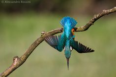 Suicide dive by Alessandro Rossini