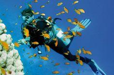Malediven tauchen im Malediven Reiseführer http://www.abenteurer.net/194-malediven-reisebericht/