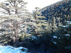 chelia auress .algerie